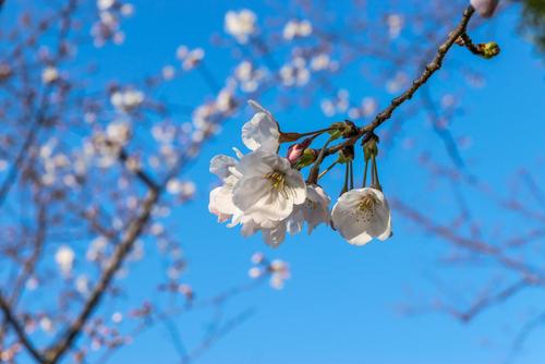 春の日の挨拶