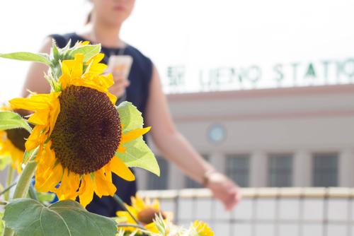 夏の暑い日の挨拶