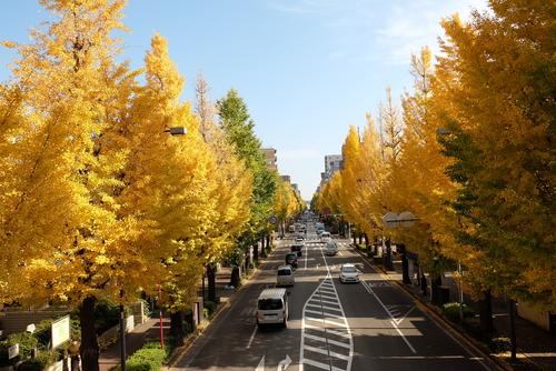 秋の日の挨拶